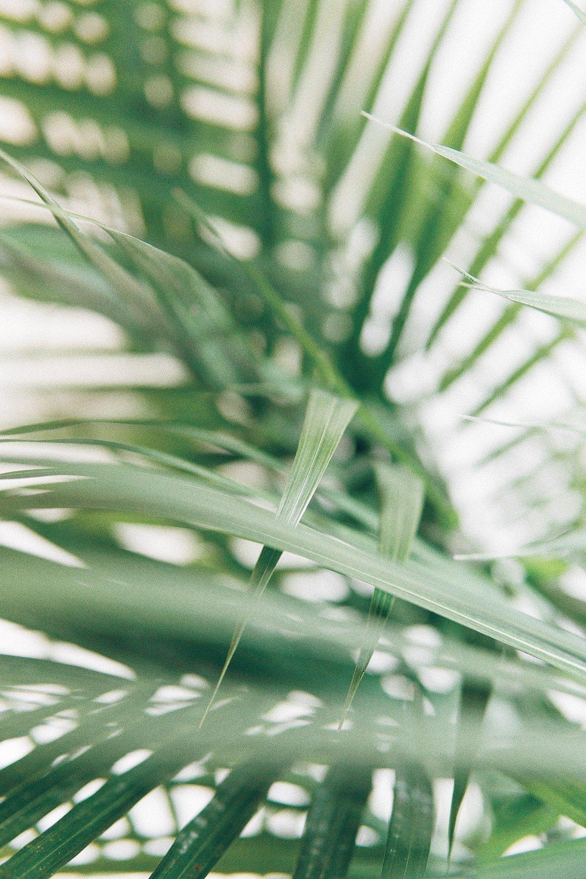5 Greenwashing Techniques